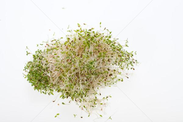 健康食 新鮮な 孤立した 白 食品 自然 ストックフォト © wjarek