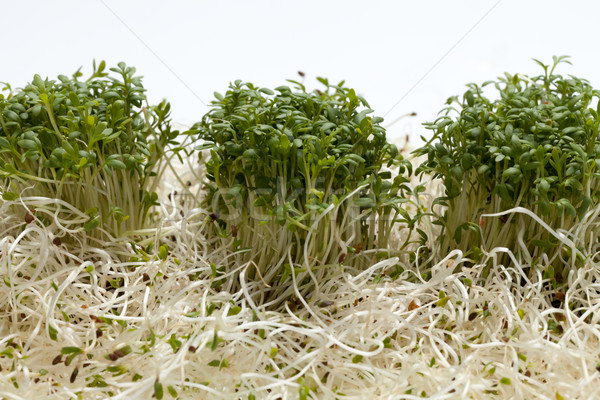 Frescos alfalfa blanco textura alimentos resumen Foto stock © wjarek
