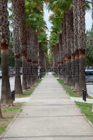 The neverending avenue with palms in Manacor. Majorca, Spain Stock photo © wjarek