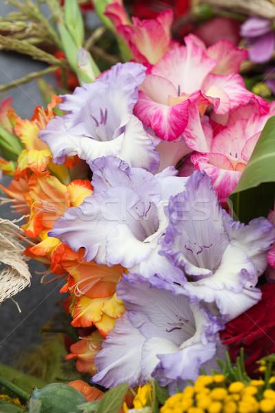 Kleurrijk boeket schoonheid zomer Rood najaar Stockfoto © wjarek