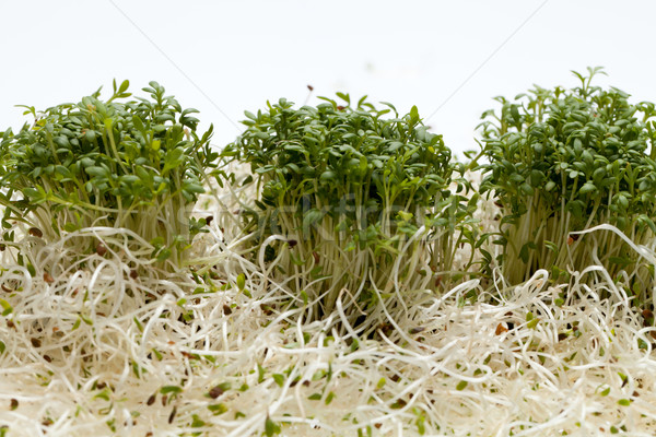 Stock photo: Fresh alfalfa sprouts and cress on white background