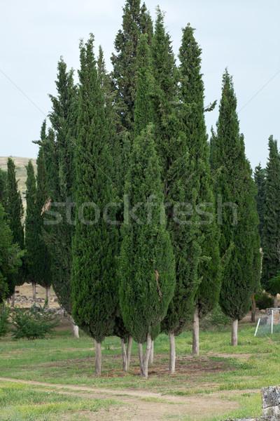 Сток-фото: идиллический · пейзаж · дома · дерево · природы