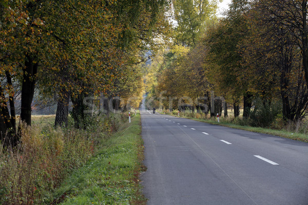 ong, straight road in autumn colors Stock photo © wjarek