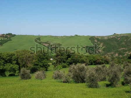 The landscape of the Val d'Orcia.  Stock photo © wjarek