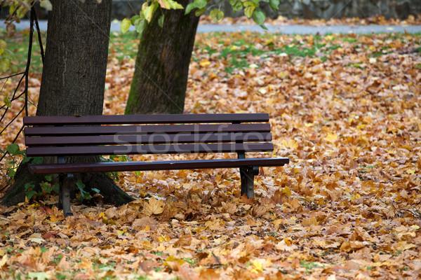 пусто скамейке парка осень лес природы Сток-фото © wjarek