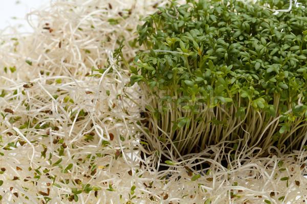Fresh alfalfa sprouts and cress on white background Stock photo © wjarek