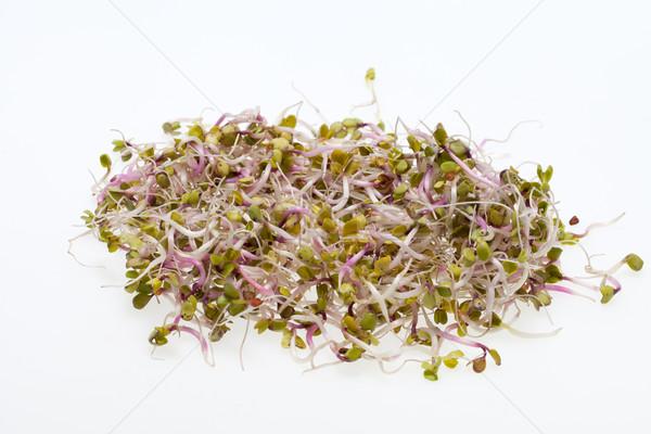 健康食 新鮮な 孤立した 白 抽象的な 葉 ストックフォト © wjarek