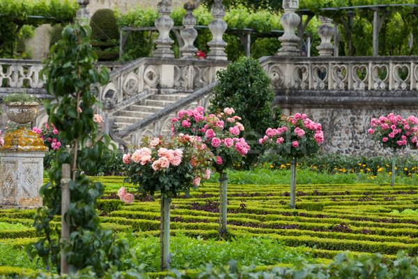 Keuken tuin vallei Frankrijk bloem natuur Stockfoto © wjarek