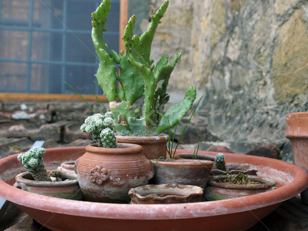 Stock photo: collection of cacti in ceramic flowerpots
