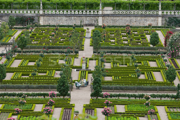 Kitchen garden in  Chateau de Villandry. Loire Valley, France  Stock photo © wjarek