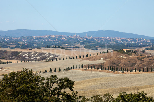 Crete Senesi Stock photo © wjarek