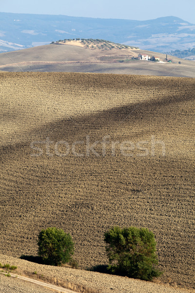 The landscape of the  Tuscany. Italy Stock photo © wjarek