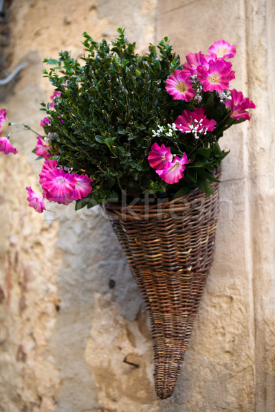Bouquet of purple petunias Stock photo © wjarek