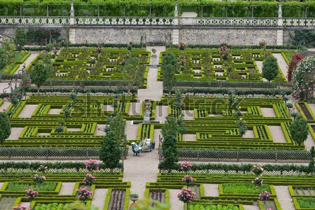 Kitchen garden in  Chateau de Villandry. Loire Valley, France  Stock photo © wjarek