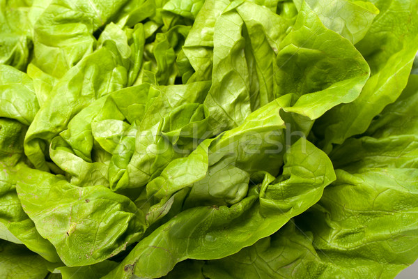 Fresh green Lettuce salad isolated on white background  Stock photo © wjarek