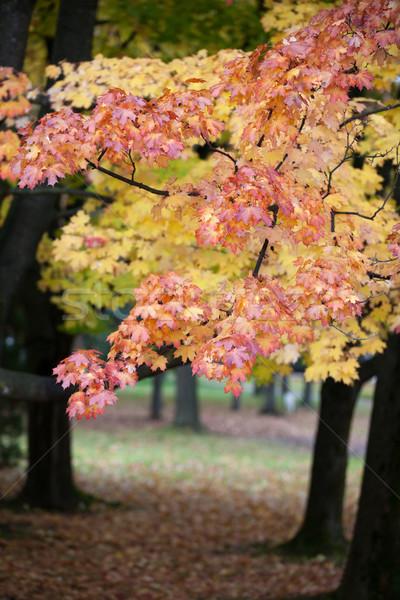 Stock fotó: Gyönyörű · ősz · fák · park · fa · erdő