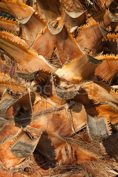a palm tree trunk.  Stock photo © wjarek