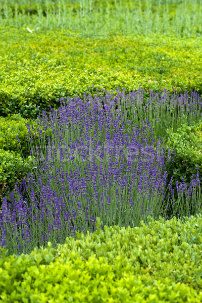 Stock photo: Splendid, decorative gardens at castles in the Valley of Loire