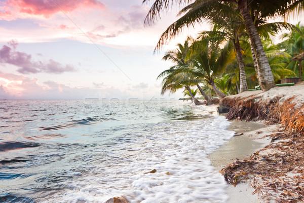 Stock fotó: Trópusi · tengerpart · gyönyörű · nyugalmas · tengerpart · nap · déli