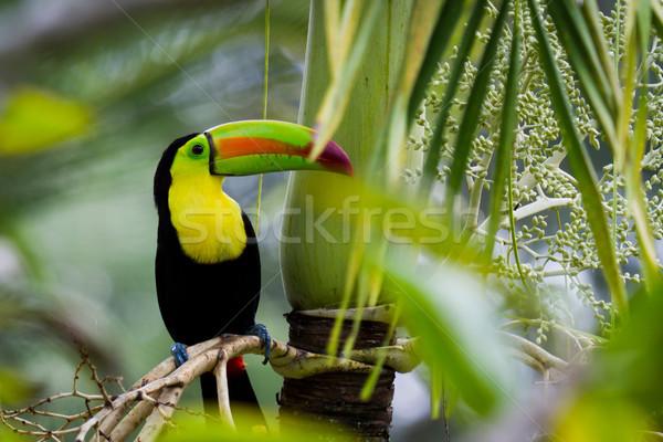 Stock fotó: Közelkép · esőerdő · Belize · zöld · utazás · piros