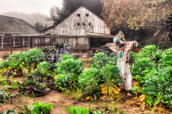 Scarecrow watches over the garden in the morning fog in the United States Stock photo © wolterk