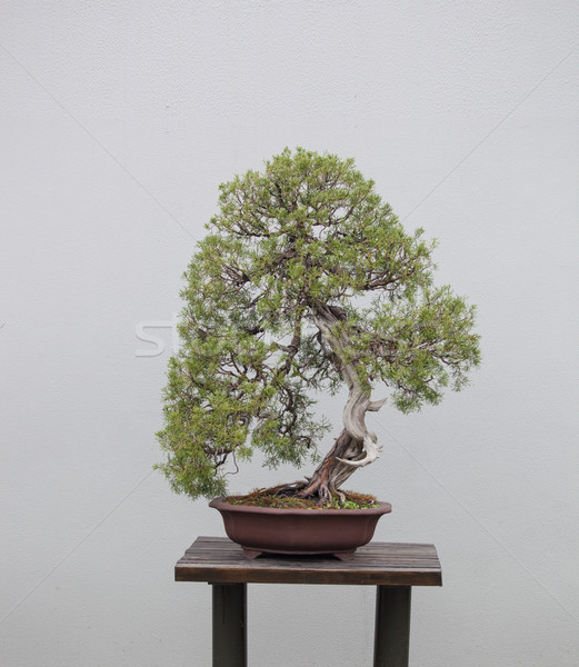 Bonsai planten breed variëteit bloementuin achtergrond Stockfoto © wxin