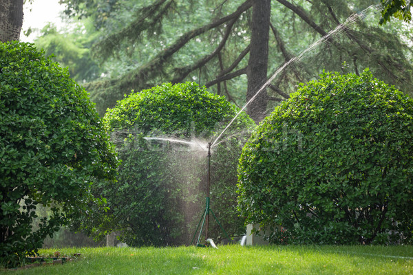 spray irrigation Stock photo © wxin