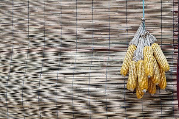 Kukurydza star wiszący żywności dziedzinie roślin Zdjęcia stock © wxin
