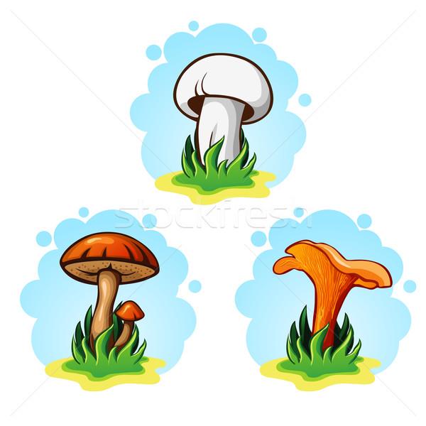 Ingesteld champignons bos keuken groene diner Stockfoto © wywenka