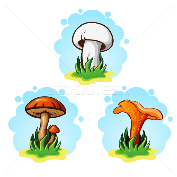 set of mushrooms vector illustration  Stock photo © wywenka