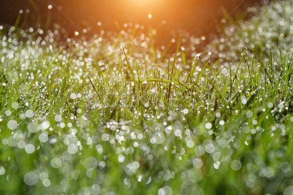 Verão manhã jardim idílico gotas de água orvalho Foto stock © X-etra