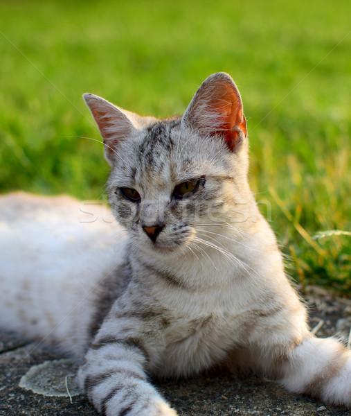 Gato bonitinho retrato pequeno jardim bom Foto stock © X-etra
