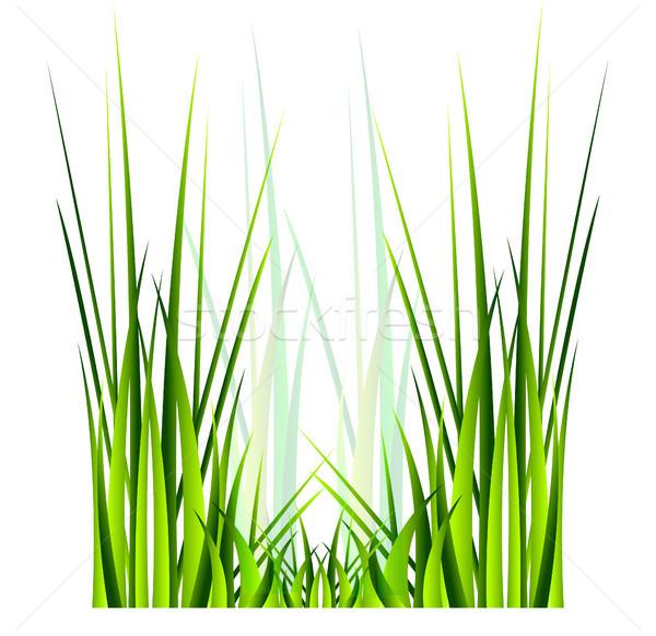 Vettore erba verde isolamento bianco primavera estate Foto d'archivio © X-etra