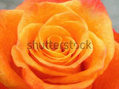 Steeg mooie detail oranje bloem tuin Stockfoto © X-etra
