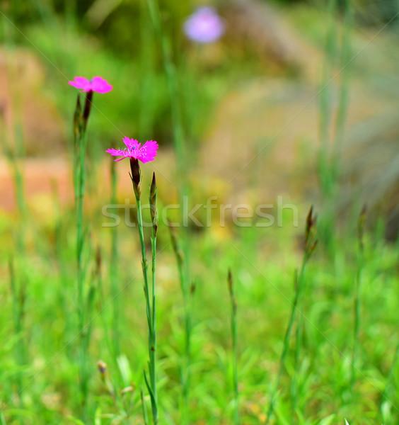 Flor pormenor jardim de flores verão tempo Foto stock © X-etra