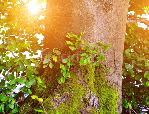 Meşe ağacı detay yaz zaman gökyüzü Stok fotoğraf © X-etra