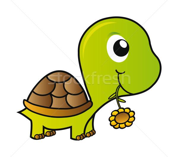 Tartaruga bom ilustração verde jovem isolado Foto stock © X-etra