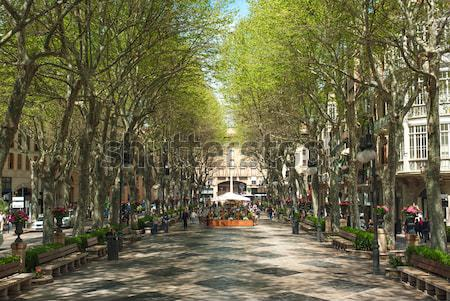 Boulevard Born in Palma de Mallorca, Spain, Europe Stock photo © Xantana
