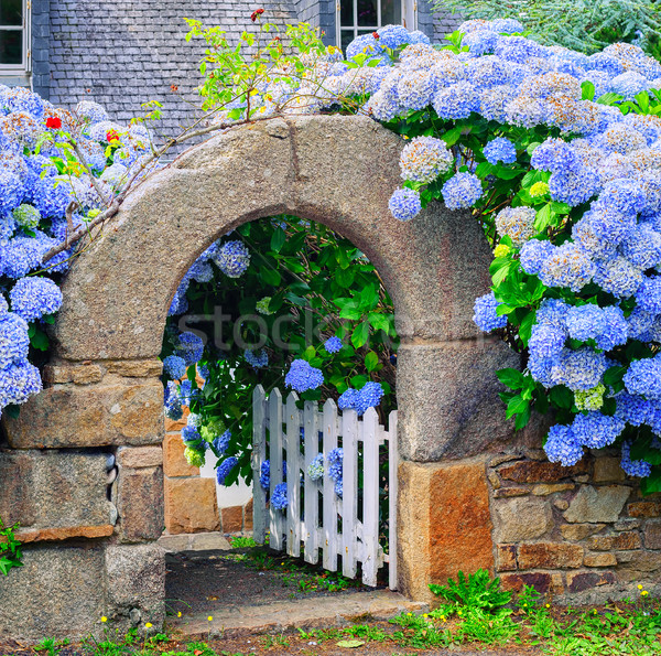 Blue flowers decorating a gate in Brittany, France Stock photo © Xantana