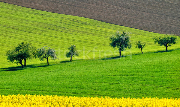 Colorful countryside landscape in Bavaria, Germany Stock photo © Xantana
