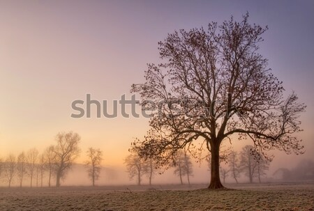 Stock photo: Foggy cold winter morning with tree silhouette