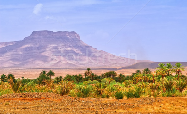 Date palms landscape in oasis in Draa Valley, Morocco Stock photo © Xantana