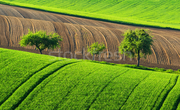 Stock photo: Green countryside landscape with trees, Germany