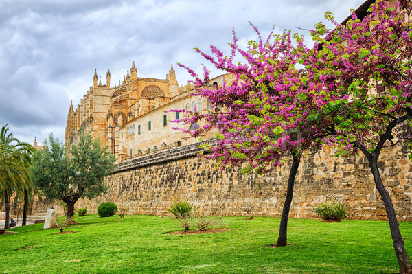 Blooming cherry tree in the cathedral garden, Palma de Mallorca, Spain Stock photo © Xantana