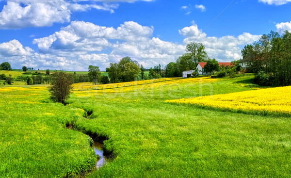 German countryside landscape with creek and yellow canola field Stock photo © Xantana