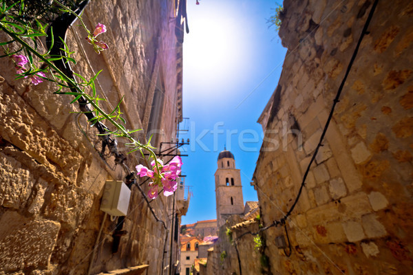 Flower in narrow Dubrovnik stone street view Stock photo © xbrchx