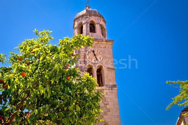 Tangerina árvore ver sul região Foto stock © xbrchx
