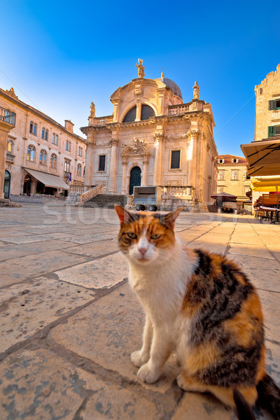 Cat posing on Dubrovnik street and historic architecture view Stock photo © xbrchx