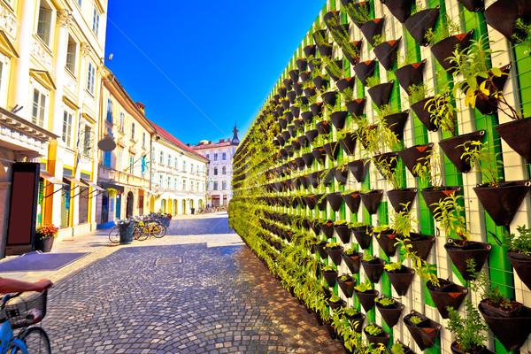 Green eco wall in Ljubljana city center Stock photo © xbrchx