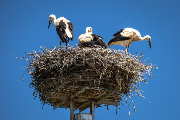 Stock photo: Stork nest with blue sky background